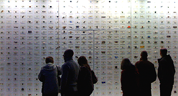 People looking at an array of specimens in the Tate Modern gallery