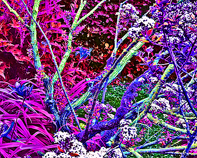 Unnaturally coloured image of garden vegetation