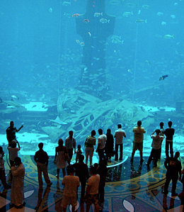 Huge fish tank with people standing infront of it