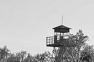 Lookout tower above treetops