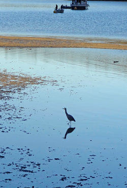 Heron in water, sandbar, boat