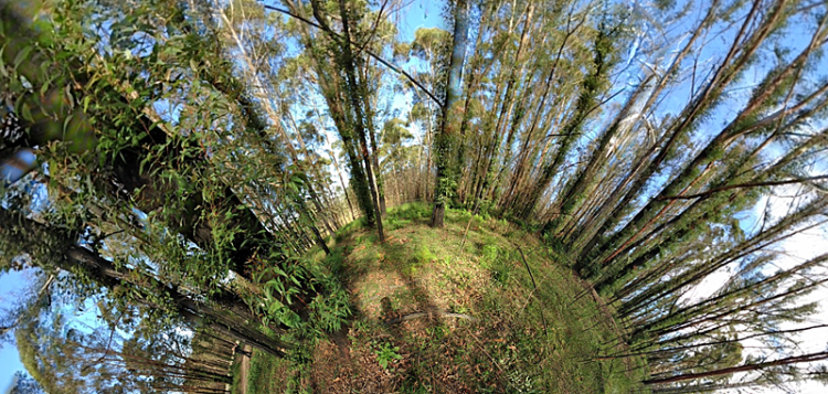 Panoramic fish-eye lens image, mostly tree trunks