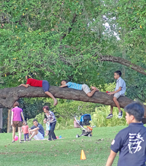 Singapore Botanical Gardens: Families in a park. Three children lying on the branch of a large tree.