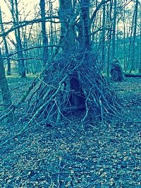 Rustic Shelter, Crieff, Scotland: A tree in the woods with branches stacked against it to make a shelter