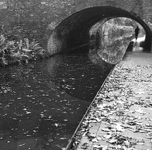 Canal, bridge, black and white, autumn leaves, jogger