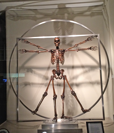 VitruvianManSkeleton