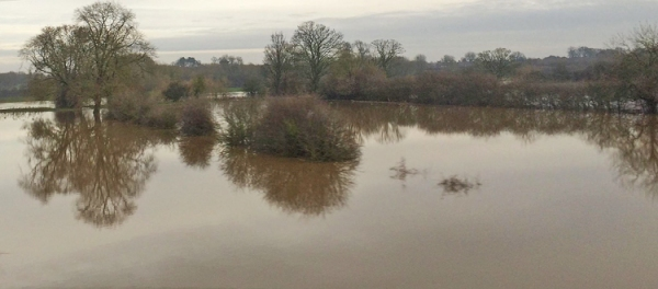 Flooded field1