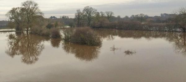 Flooded field1