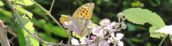 ButterflyItaly