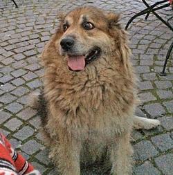dog - 1